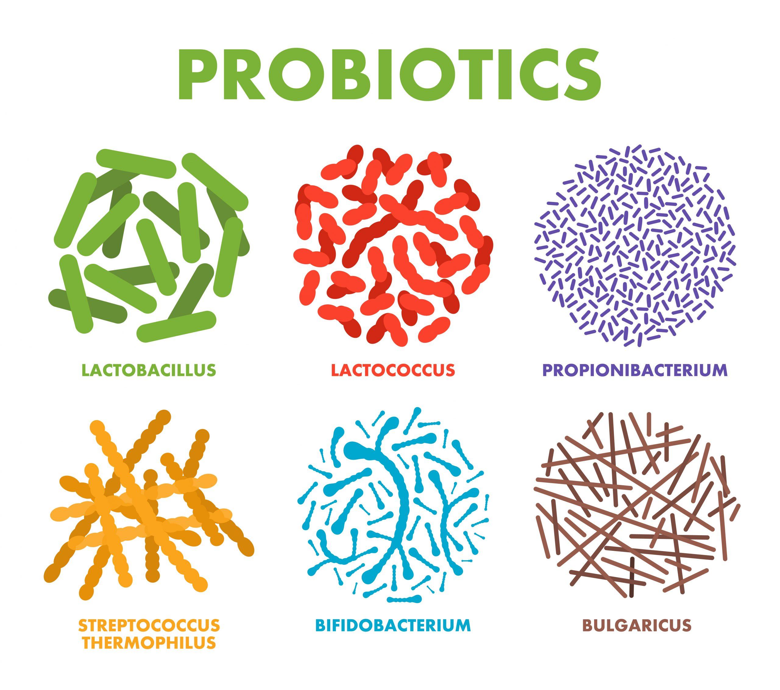 益生菌不同種類